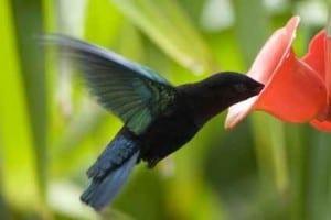 kolibri-xs-a-kingx-fotolia1