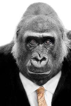 gorilla_xs_Sue Colvil - Fotolia