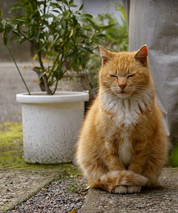 meditating cat_kwd_flickr.