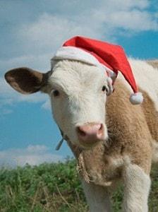 kuh_weihnachten_xs_iStock_000007809036XSmall