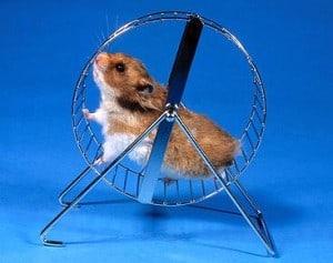 hamster laufrad beruf psychofalle beruf web Harald Lange - Fotolia