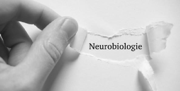 persönlichkeitsseminare, neurobiologie, kopp-wichmann, hüther
