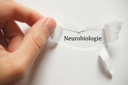 coaching, neurobiologie, persönlichkeitsseminar,